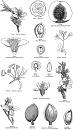 Clicca sull'immagine per ingrandirla  Nome:   rosaceae.jpg Visite: 3155 Dimensione:   92.3 KB ID: 19747