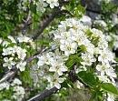 Clicca sull'immagine per ingrandirla  Nome:   fiori.jpg Visite: 2334 Dimensione:   59.5 KB ID: 2971