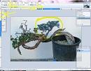 Clicca sull'immagine per ingrandirla  Nome:   lazo 1.JPG Visite: 1350 Dimensione:   77.4 KB ID: 10003