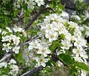 Clicca sull'immagine per ingrandirla  Nome:   fiori.jpg Visite: 2323 Dimensione:   59.5 KB ID: 2971