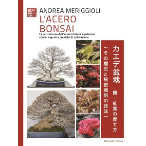 L'acero bonsai